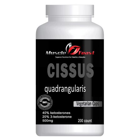 Cissus Quadrangularis Featured